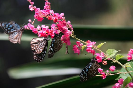 Огромная территория сада огорожена мелкой сеткой, из-за чего кажется, что бабочки летают на воле