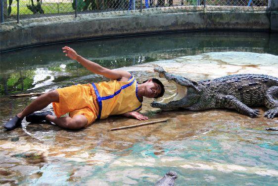 Невозможно уехать с Самуи, не побывав на захватывающем шоу крокодилов