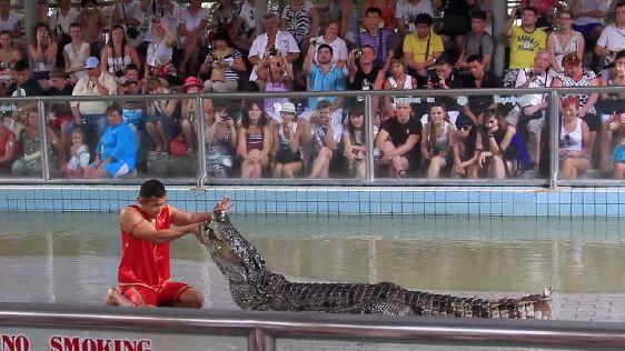 По мнению большинства туристов из многих стран мира, шоу крокодилов - одно из самых впечатляющих ''развлечений'' во всём Тайланде, и мы с ними полностью солидарны