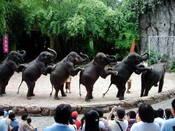 Захватывающее выступление слонов в парке ''Сафари Ворлд''