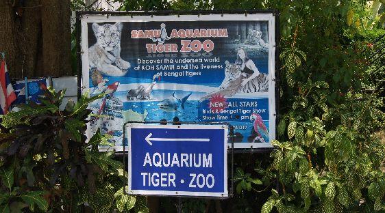 Хотите окунуться в красочный подводный мир коралловых рифов? Тогда ищите этот указатель!