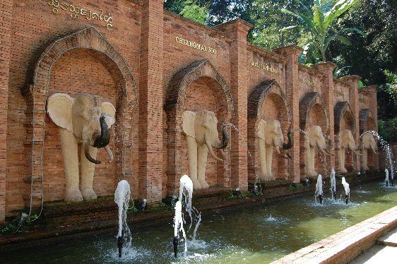 Слоны пользуются в Чианг Май особым уважением — это своеобразный символ города