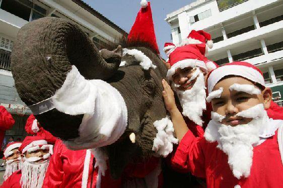 Одно из главных развлечений в Таиланде - езда на слонах