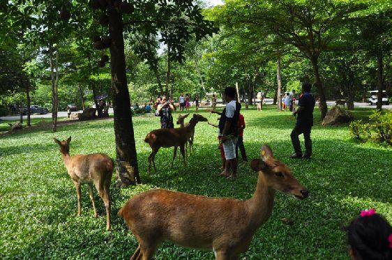 В парке Кхао-Кхео дети смогут понаблюдать за дикой природой и ее животными