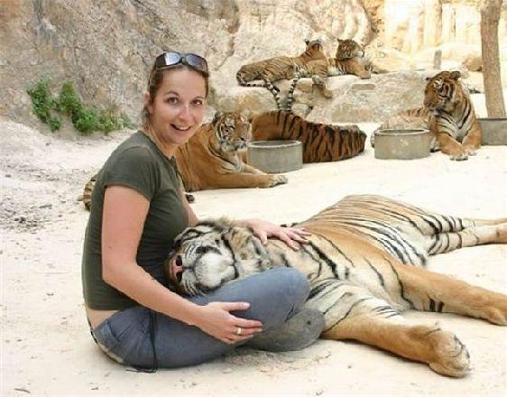 В Си Раче ваших детей ждут настоящие тигры, одна не стоит терять бдительность, ведь это все-таки настоящие тигры!!