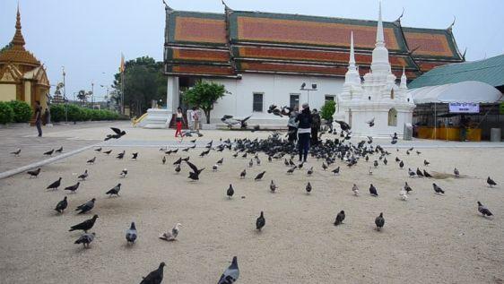 В Таиланде распространены некоторые приметы, связанные с птицами